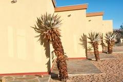 Plantas africanas ao lado da casa amarela fotografia de stock royalty free