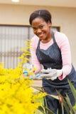 Plantas africanas de la poda de la mujer Imagen de archivo libre de regalías