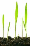 Plantas aisladas Imagen de archivo