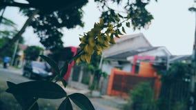 Plantas amarelas Imagem de Stock Royalty Free