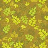Plantas amarelas Imagens de Stock Royalty Free