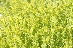 Plantas amarelas e verdes fotos de stock
