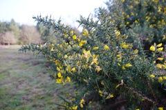 Plantas amarelas em mais forrest fotos de stock royalty free