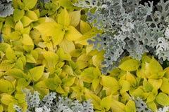 Plantas amarillas Fotos de archivo