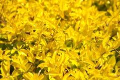 Plantas amarillas como fondo Fotos de archivo libres de regalías