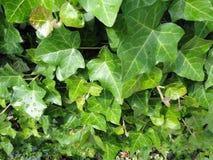 Plantas ambarinas Imagenes de archivo