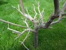 Plantas ambarinas Imagen de archivo libre de regalías