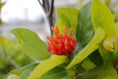 Plantas anaranjadas de las hojas de la flor y del verde Foto de archivo libre de regalías