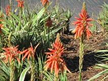 Plantas anaranjadas y verdes fotografía de archivo