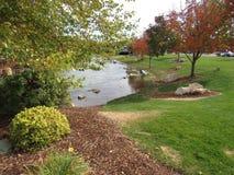 Plantas ao lado do rio rujir Fotos de Stock