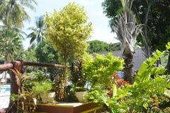 Plantas ao longo da piscina de San Vali, cidade de Digos, Davao del Sur, Filipinas foto de stock