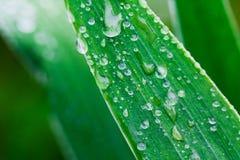 Plantas após uma chuva Fotografia de Stock