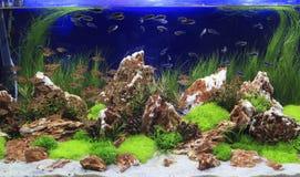 Plantas aquáticas em tropical fotografia de stock