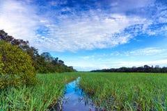 Plantas aquáticas em um rio foto de stock royalty free