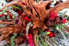 Plantas artísticas Fotografia de Stock