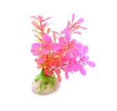 Plantas artificiais isoladas no branco Imagens de Stock Royalty Free