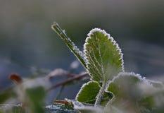 Plantas atrasadas gelados da manhã do outono imagem de stock royalty free
