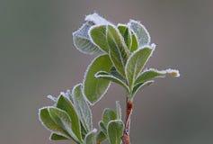 Plantas atrasadas gelados da manhã do outono foto de stock royalty free