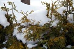 Plantas bajo la nieve Foto de archivo