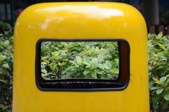 Plantas bonitas através de um escaninho dos desperdícios Imagem de Stock Royalty Free