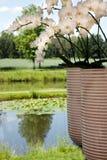 Plantas bonitas da flor branca no caminho do rio Fotos de Stock