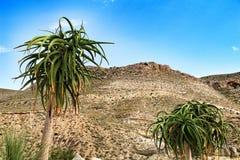Plantas bonitas do cacto nas montanhas fotografia de stock