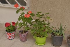 Plantas bonitas na jarda foto de stock