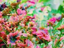 plantas brillantes que traen millón de esperanzas imagen de archivo libre de regalías