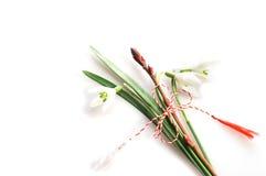 Plantas, brotes y snowdrops de la primavera Foto de archivo