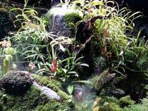 Plantas carnívoras Foto de archivo