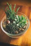 Plantas carnudas bonitas na bacia de vidro Imagens de Stock