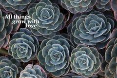Plantas carnudas com um provérbio positivo imagem de stock