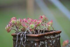 plantas carnudas, cores de Beautiy no campo, França foto de stock royalty free