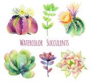Plantas carnudas da aquarela ilustração stock