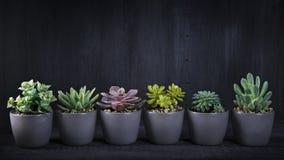 Plantas carnudas diferentes Fotos de Stock