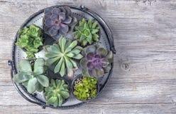 Plantas carnudas diferentes Imagem de Stock