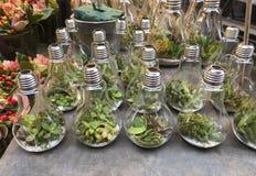 Plantas carnudas diferentes nos bulbos no contador Imagens de Stock Royalty Free