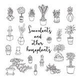 Plantas carnudas e outros houseplants imagem de stock