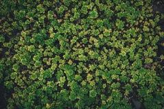Plantas carnudas em um jardim botânico Imagem de Stock Royalty Free