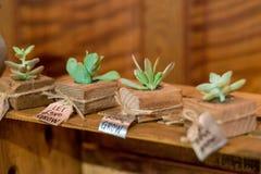 Plantas carnudas no copo de água Imagem de Stock