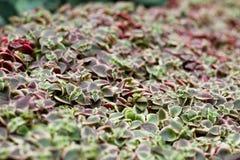 Plantas carnudas no jardim pela baía Imagens de Stock