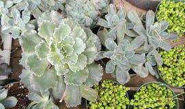 Plantas carnudas ou cactos Fotos de Stock Royalty Free