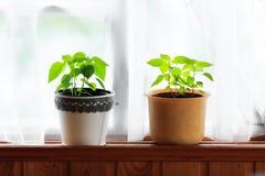 Plantas caseras foto de archivo libre de regalías