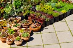 Plantas caseras para la venta imagen de archivo