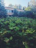 Plantas cerca del edificio de la izquierda y del campamento de verano soviético olvidado Skazka no lejos de Moscú Foto de archivo libre de regalías