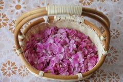 Plantas color de rosa salvajes siberianas de los pétalos en una cesta de mimbre Foto de archivo libre de regalías