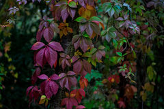 Plantas coloreadas Imagen de archivo libre de regalías