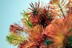 Plantas coloreadas en el fondo blanco 04 Fotos de archivo