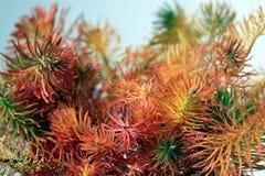 Plantas coloreadas en el fondo blanco 02 Foto de archivo libre de regalías