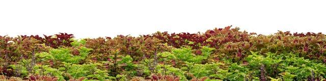 Plantas coloridas Foto de archivo